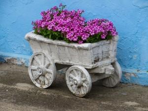 flowers-850576_640